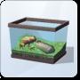Heartsurfer Frog