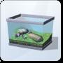Sunsurfer Frog