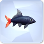 Red-Tailed Black Shark