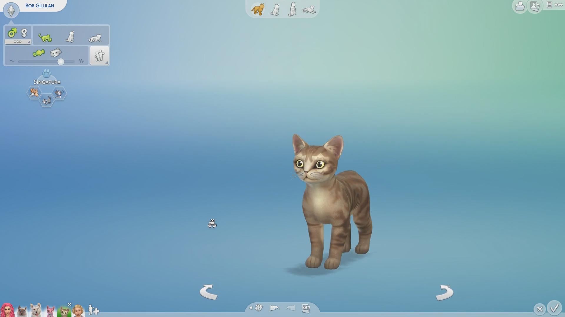 Create a Pet Kitten