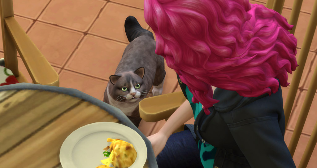 Cats and dogs can beg their owners for food