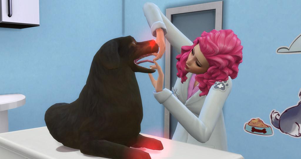 Examine pet